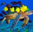 Рыбы,черепахи